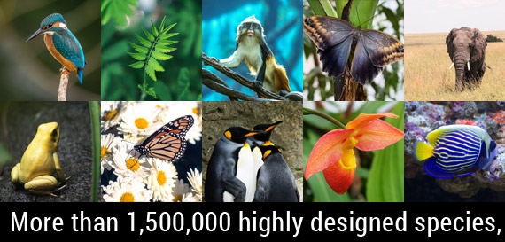 More than 1,500,000 highly designed species